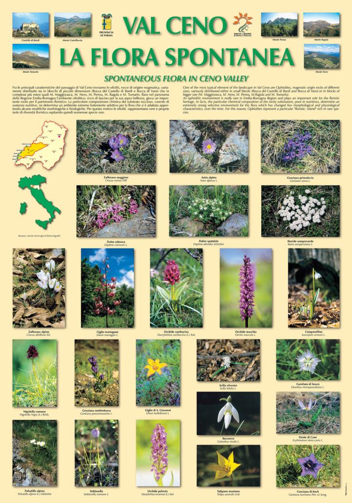 Segadelli - Val CENO - Flora spontanea